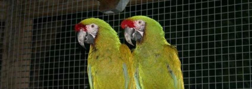 B&B4Birds | Rescue Sanctuary, Boarding, Behavioral Training
