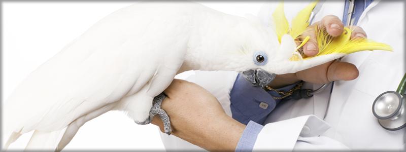 avianvetheader